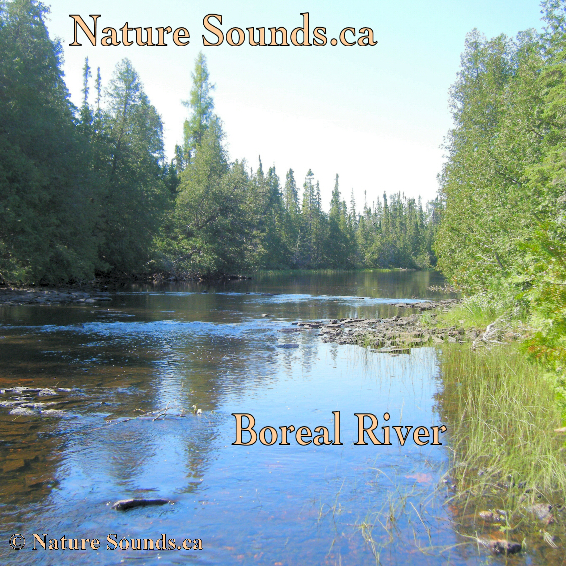 mp3 nature sounds free download