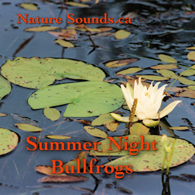 Summer Night Bullfrogs Sounds